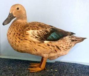 Elizabeth Duck Pictures