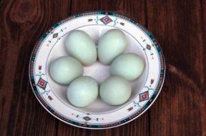 Saxony Duck Eggs